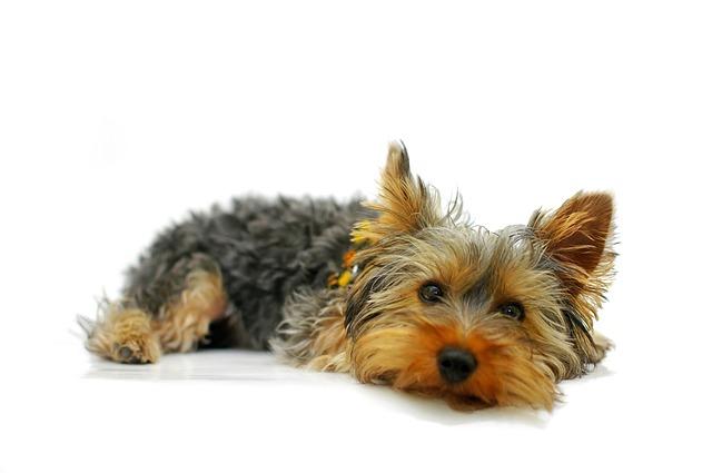 Barf Shop Online Hund liegend