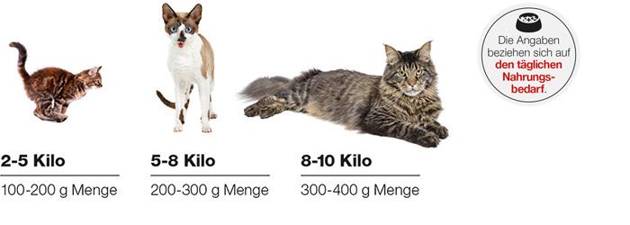Barf Fütterungsempfehlung Katzen