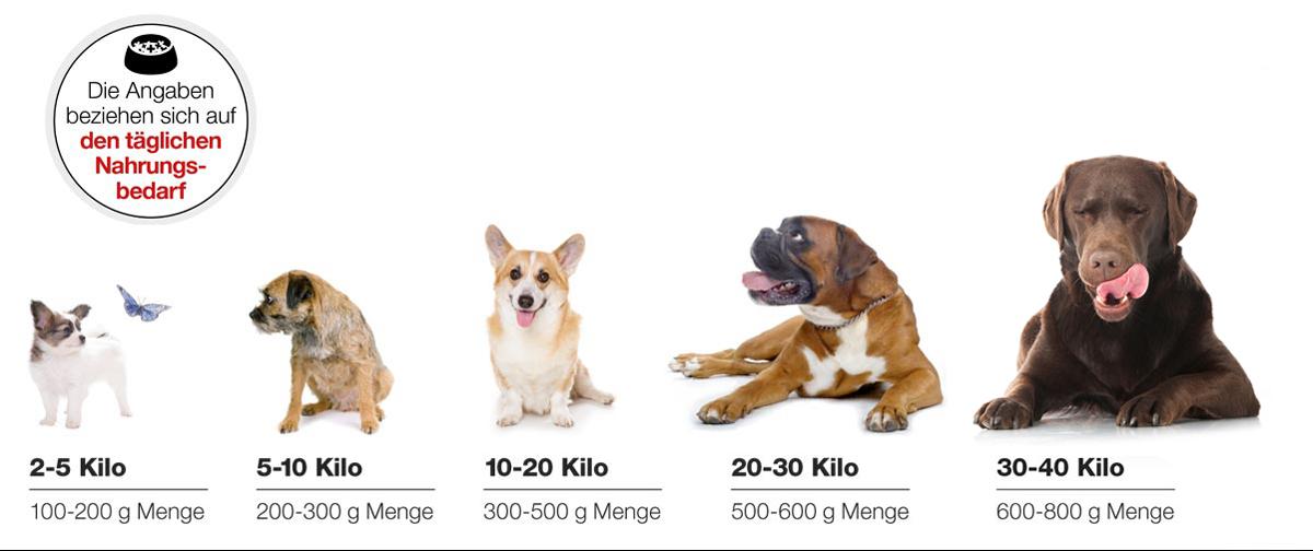 Hund Barf Fütterungsempfehlung