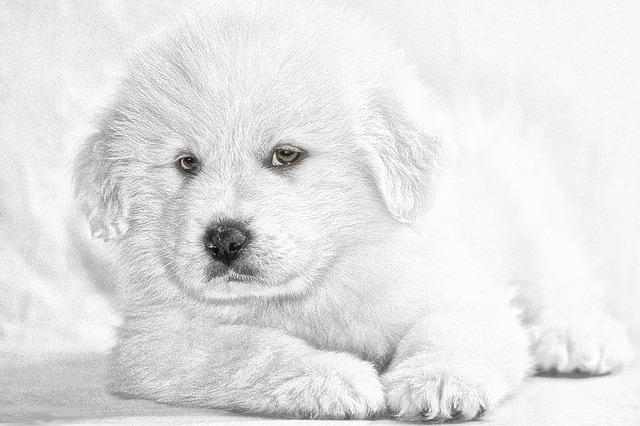 Hund stubenrein bekommen: Wie funktioniert es?