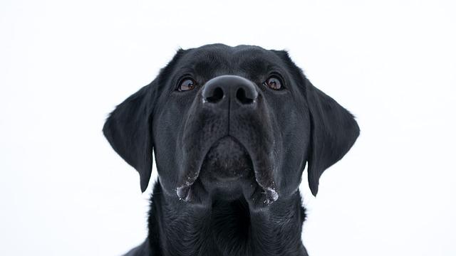 Frohlinder Hundewurst Sensitiv