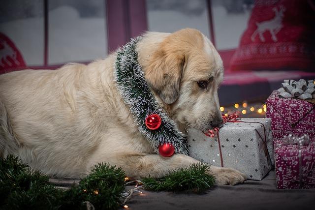 Adventskalender für Hunde: Die besten Hunde Adventskalender 2020 finden